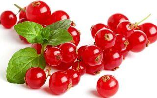 Польза и вред красной смородины, калорийность