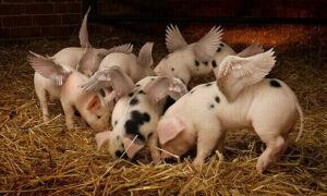 Состав и полезные свойства нутряного свиного сала