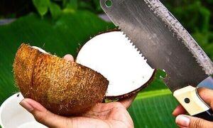 Как правильно выбрать кокос?